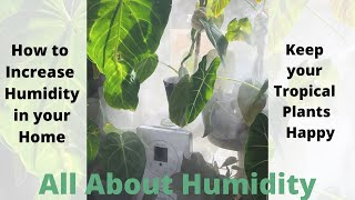 All About Humidity | Increase Humidity for your Houseplants