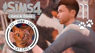 The Sims 4: Кафе с кошками #11 - ПРИЮТ ДЛЯ БЕЗДОМНЫХ  КОШКИ и СОБАКИ 