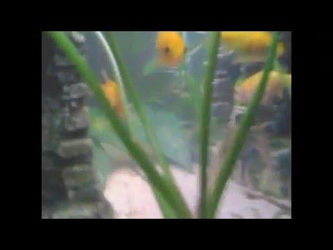Acuario aqualight 90 litros youtube for Acuario 90 litros