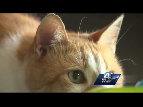 Flame the Arson Cat lifts the spirits of Greenville County firefighters