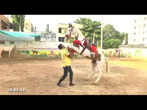 Horse Riding School Tolichowki Hyderabad