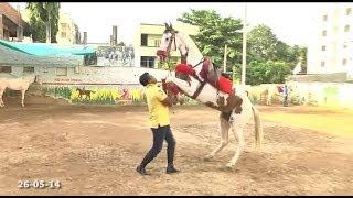 Horse Riding School Tolichowki Hyderabad
