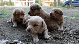 Adopted puppies - Eyes already open and trying to explore our yard