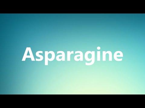 Asparagine - Medical Definition