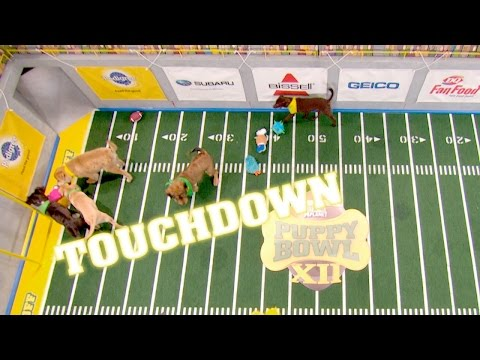 Historic Joint Touchdown | Puppy Bowl Xii