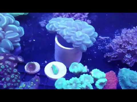 San Francisco Bay Local Fish Store Tour With Northern Valley Reefers