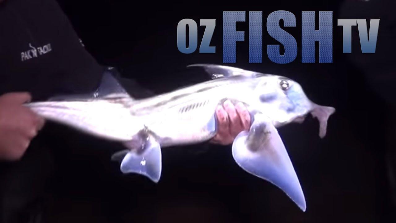 Download Oz Fish TV Season 3 Episode 10 - Westernport Landbased