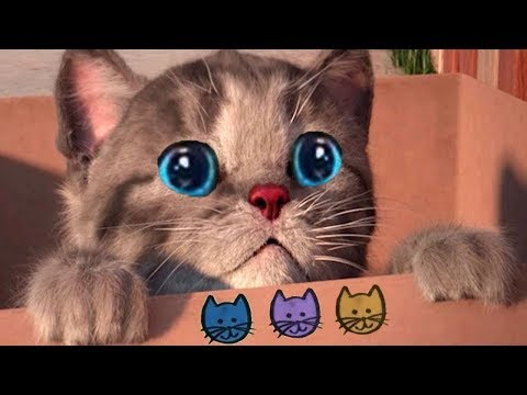 Little Kitten My Favorite Cat Pet Care - Play Fun Cute Kitten Care Games For Kids Children Toddlers