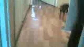 Собака с мячом.(, 2012-11-26T06:25:22.000Z)