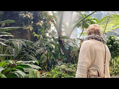 EXCITING Rare Botanical Garden House Plant Tour! Go Plant Hunting At The Amazon Spheres In Seattle!