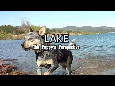 Lake - Puppy Perspective