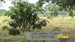 Gourmet Farms on Asenso Pinoy - Agri Balita - Coffee Tour and Seminar