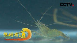 《生财有道》 20201209 浙江德清:青虾出美味 产业有智慧| CCTV财经 - YouTube