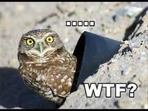O RLY? owl!