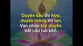 Nhạc Thiền Tịnh Tâm - Duyên sâu thì hợp, duyên mỏng thì tan - Vạn pháp tùy duyên