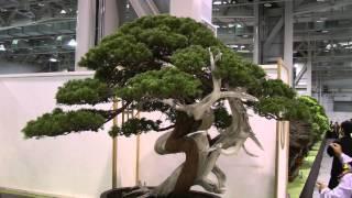 2014 Taiwan Bonsai Exhibition(2),第19回臺灣全國盆栽展,真柏專輯,Full HD 1080p