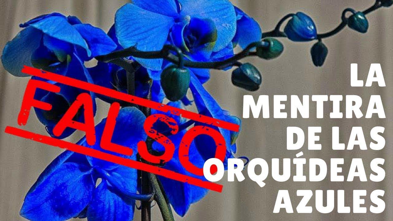 La Mentira De Las Orquideas Azules Orquiplanet Youtube