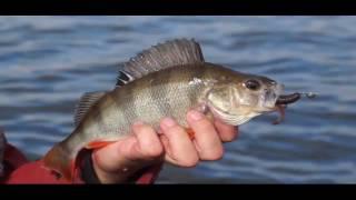 Рыбалка в Могилеве. Спиннинг. Щука