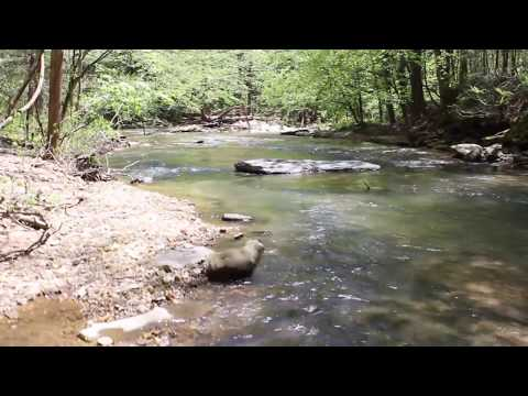 Land With Beautiful Creek Frontage | PCC-TR1