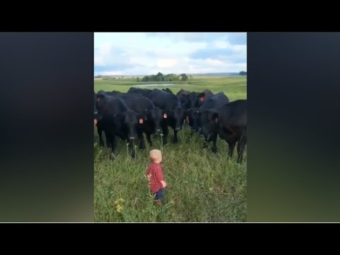 The best of Viral video of the week - February 2020 [ Ep 1 ]