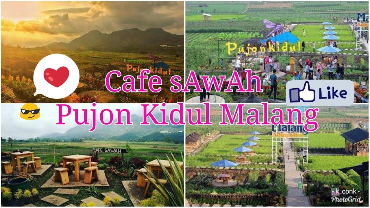 Wisata Mumer Ll Cafe Sawah Pujon Kidul Batu Malang Youtube