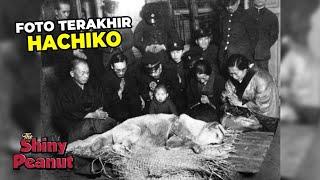 Fakta Mengejutkan Anjing Hachiko yang Jarang Orang Tau