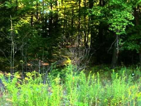 Fishing Creek Estates
