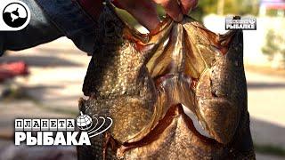 Узбекистан глазами рыболова Планета рыбака
