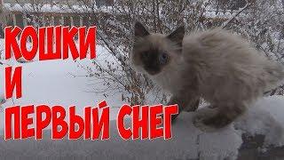Приколы с кошками. Кошки и  Первый снег./ Funny cat Cats First snow
