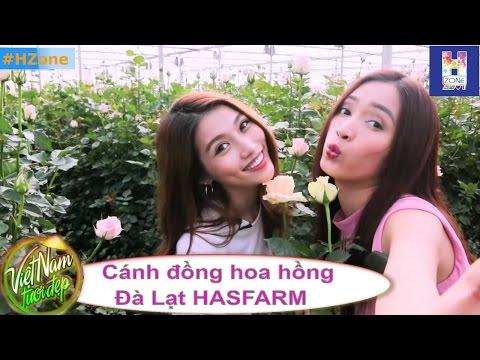 VNTD - Cánh đồng hoa  hồng Đà Lạt HASFARM - HZone