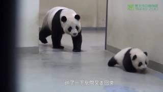 Мама панда укладывает ребенка спать