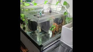 상면여과기에 수경재배 식물 키우기 - 아쿠아포닉스 Aq…