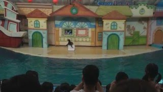 Dolphin Show at Seoul zoo in 2 Jul, 2011