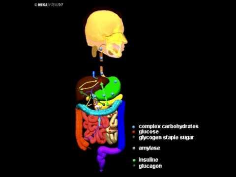Нервная система человека -