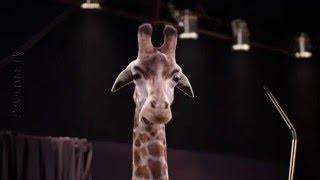 Реклама средства для повышения потенции КRакатао / Кракатао / с говорящим жирафом(сайт правообладателя ролика: http://www.krakatao.com.ua/ HD рекламный ролик средство для повышения потенции КRакатао..., 2016-01-09T15:02:26.000Z)