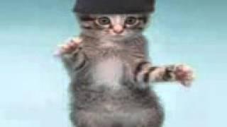 Крутые кошки прикольно)