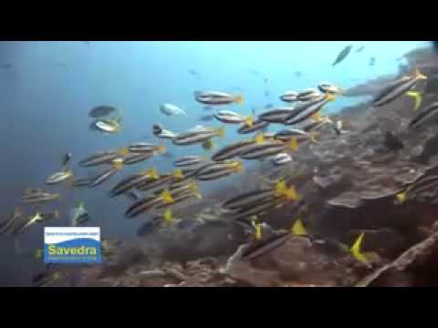 Diving Sunken Island