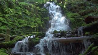 Waterfalls of the Pacific Northwest 4k NatureVisionTV