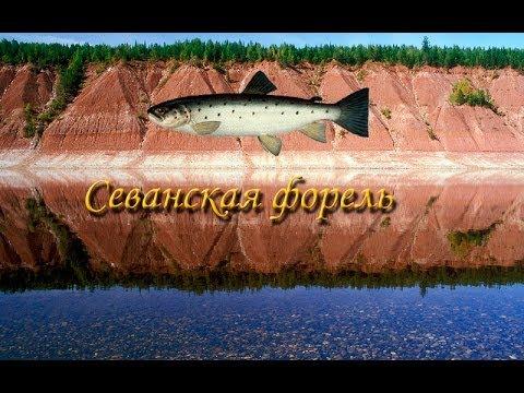 рыбалка 3 верхняя тунгуска севанская форель