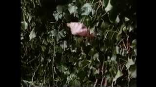 The Secret Garden trailer 1993  complete and rare