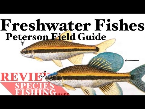 Freshwater Fishes Field Guide - Peterson - Book Review