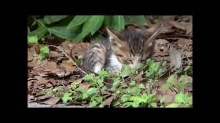 都内の公園にいた生まれて間もない仔猫たち thumbnail