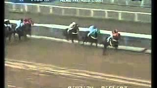 Vidéo de la course PMU PREMIO FRAT HOUSE (2008)