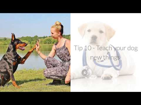 10-tips-for-controlling-your-dogs-barking-**-free-online-dog-training-mini-course-^^
