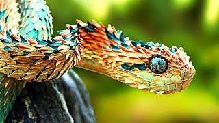 10 Самых Редких Змей в Мире