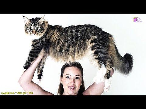 اضخم 10 حيوانات فى العالم  | لن تصدق أنها حقيقية !