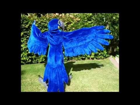 Macarena Macaw: from concept to creation!