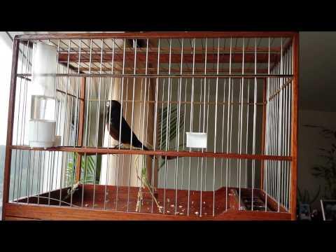 Towa towa bird