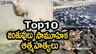 Top 10 Mass Animals Deaths || Mysteries UnFolded || Unknown Facts About Animals Death