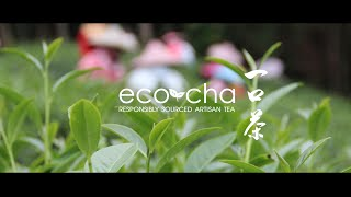 Promote Sustainability - Get Great Tea. The Eco-Cha Indiegogo video.